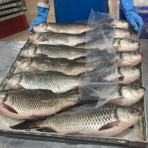 FROZEN-ROHU-FISH